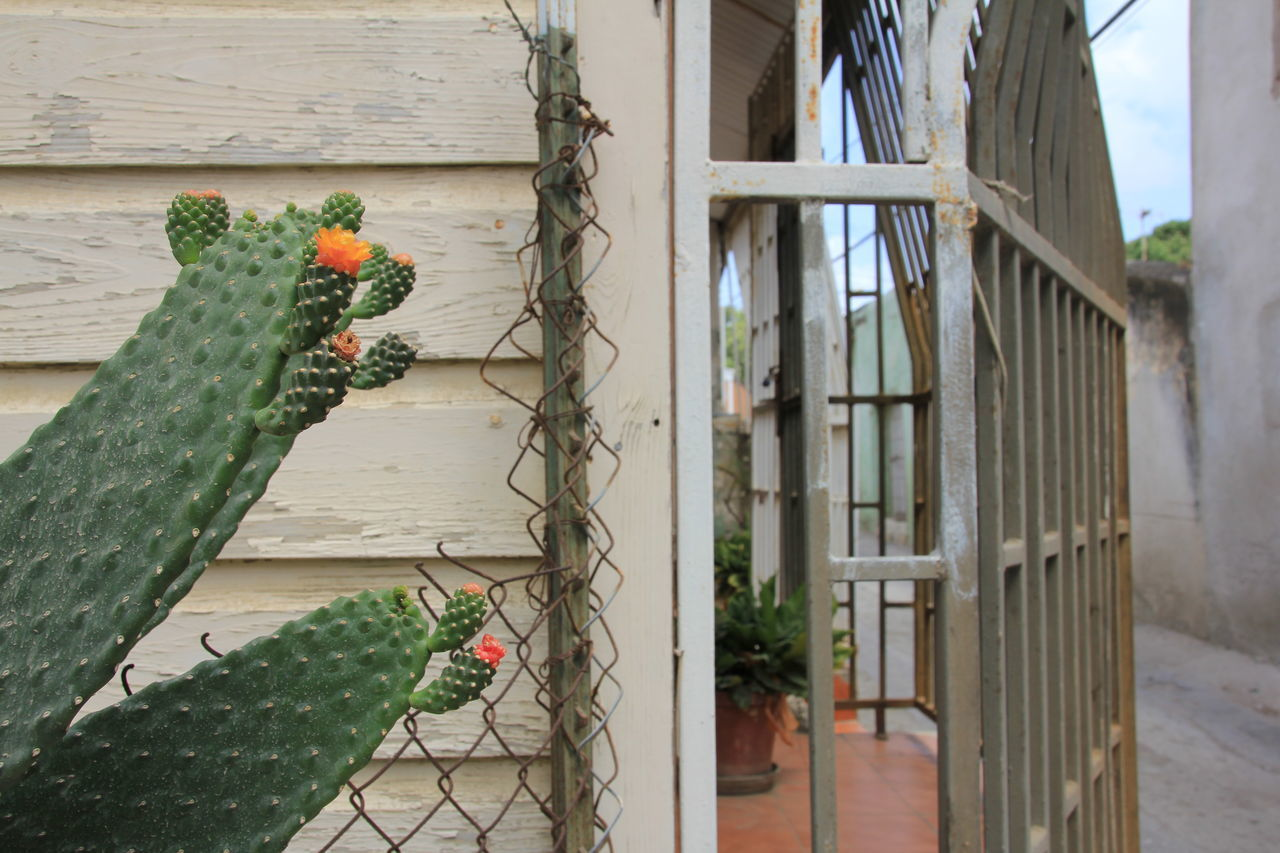 Cropped Potted Cactus Against House