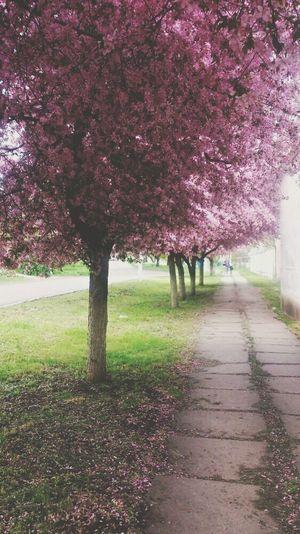 весна прогулка настроение First Eyeem Photo