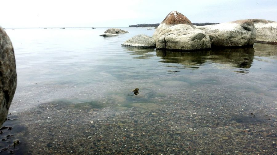 Water Tranquility No People Tranquil Scene Lake Outdoors Animal Wildlife Nature Day Travel Destinations Beauty In Nature Swimming Animal Themes Estonia Nature Freedom Tallinn Love Beach Sand City