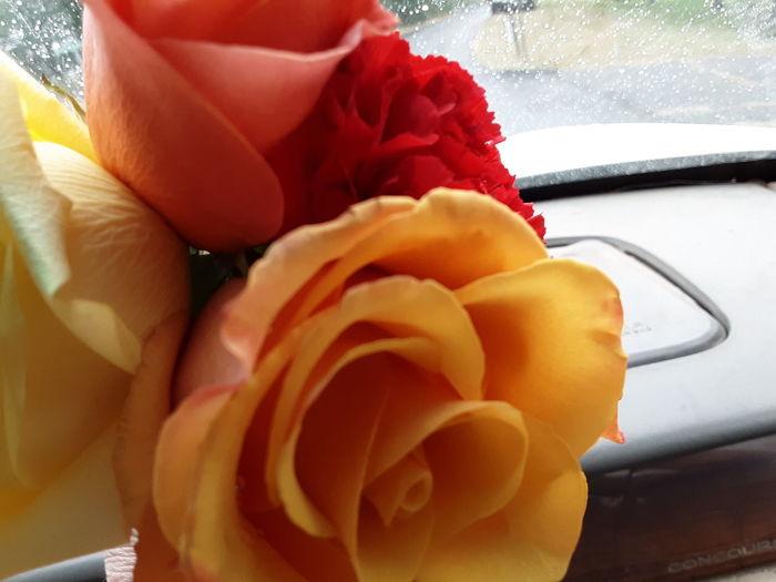 Rose's yellow