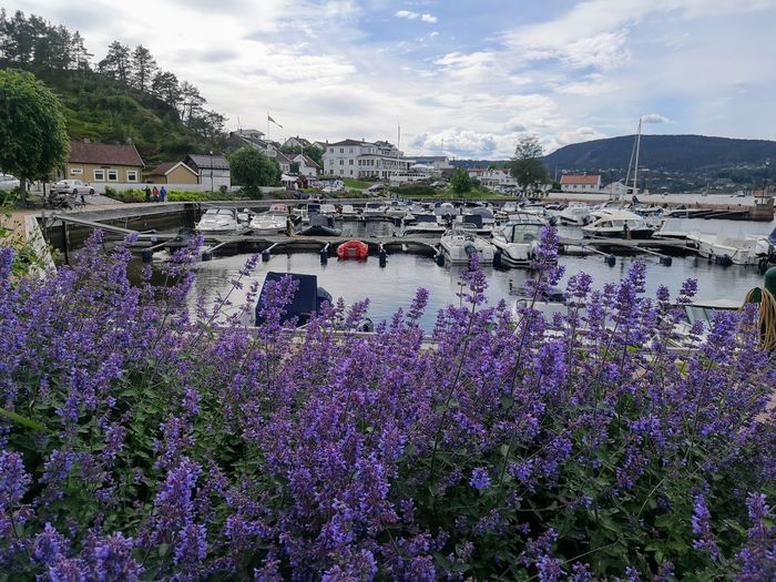 Norway Flower Water Tree Mountain Springtime Sky Cloud - Sky Building Exterior Mountain Range Lavender Colored Lavender Purple Blossom Blooming
