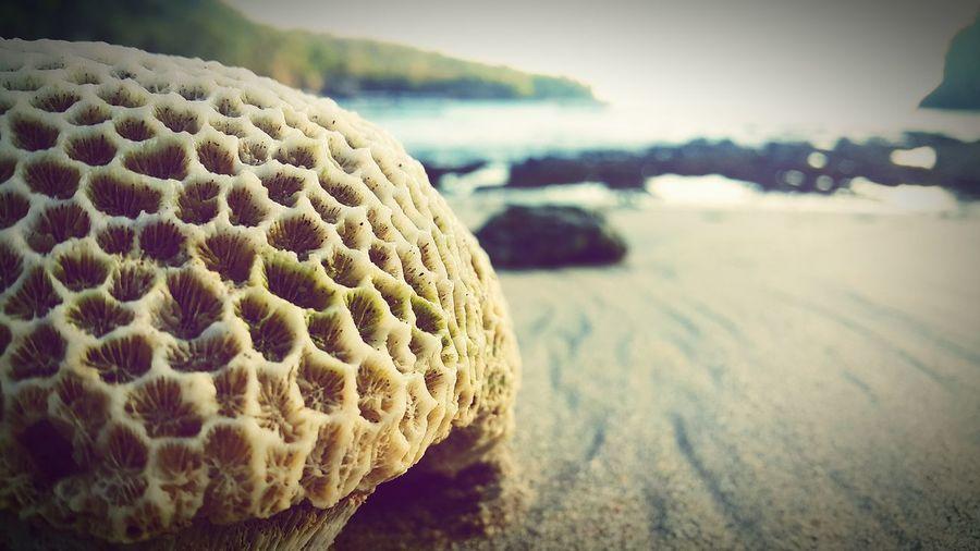 Sea Beach Sand Coral Crystal Bay Nusa Penida INDONESIA EyeEm Best Shots Galaxynote4