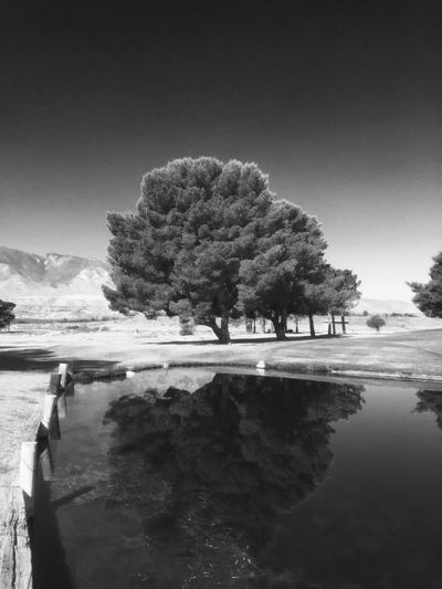 Father's Day morning at Mt. Graham Municipal Golf Course with Mt. Graham in the background. Nature_collection Trees And Sky Trees Light Blackandwhite Photography Blackandwhite Arizona Nature Safford Beauty Nature Photography Water Reflections Reflections Arizona Sky Summertime