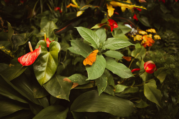 High angle view of red flowering plants