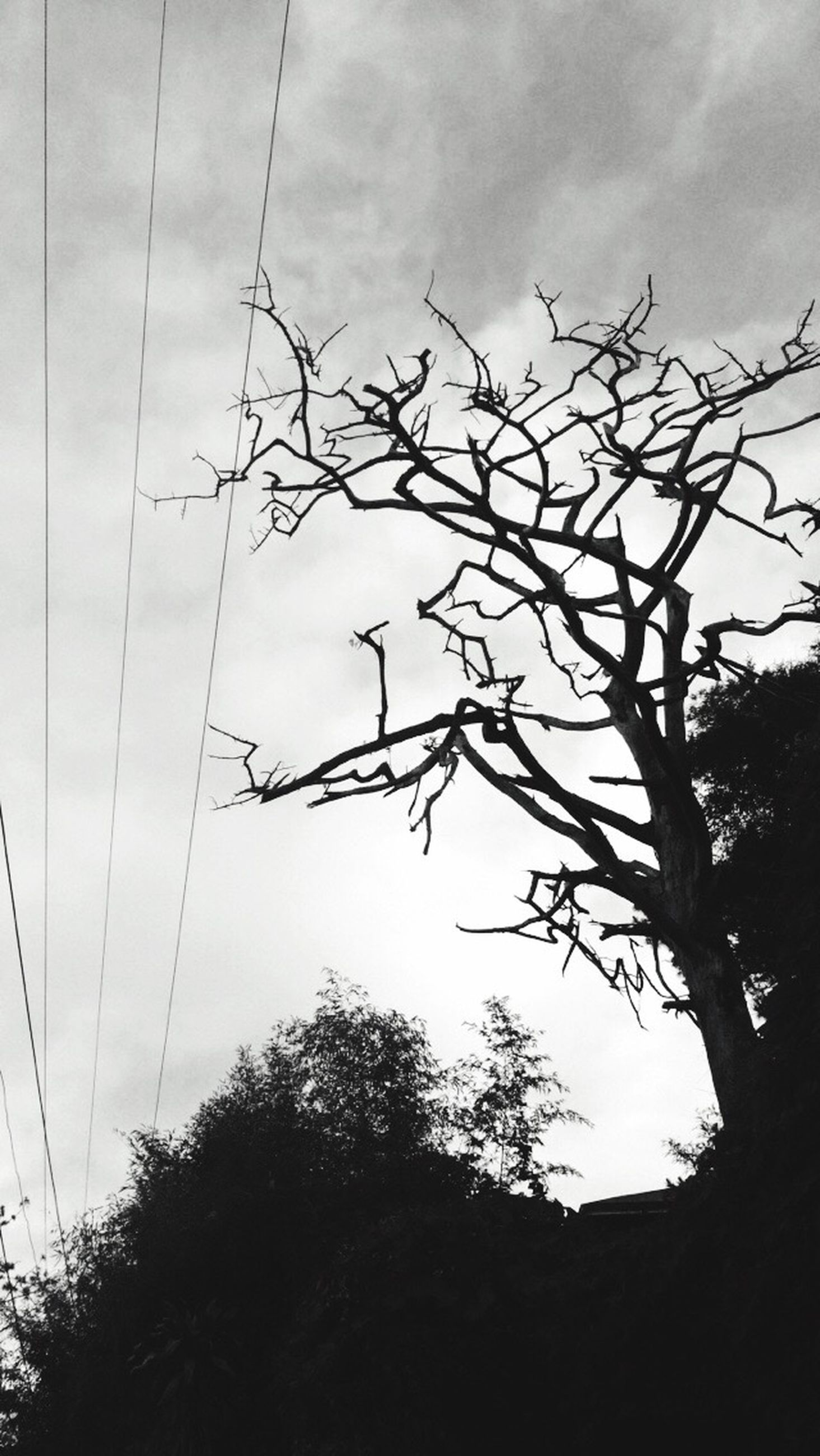 sky, low angle view, silhouette, tree, bare tree, cloud - sky, branch, cloudy, tranquility, cloud, nature, power line, beauty in nature, outdoors, tranquil scene, tree trunk, scenics, growth, no people, dusk