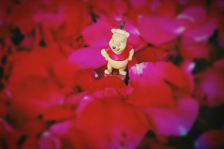 Potography Flowers Ursinhopooh🐻🐻