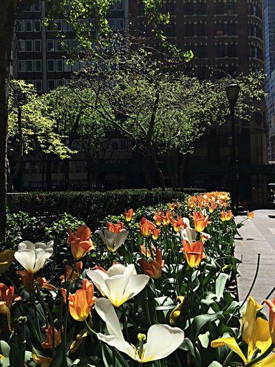 Supernormal New York City Life