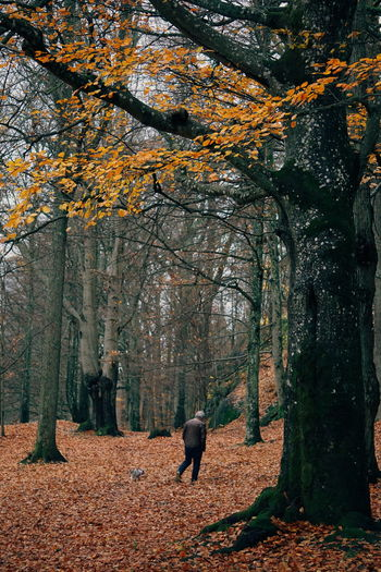 Rear View Of Senior Man Walking In Forest During Autumn