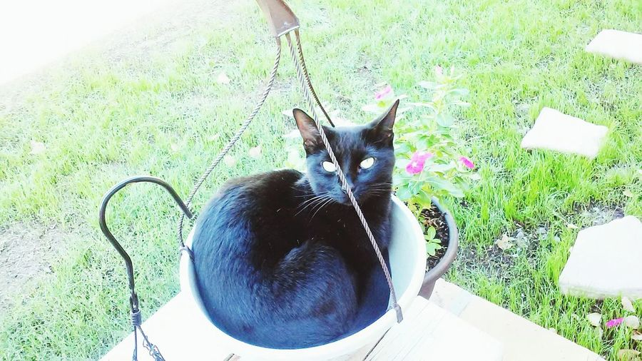 Cats Of EyeEm EyeEmAnimalLover Mylilhelper Check This Out Potting my plant took on a whole new meaning today! Guess im potting my kitty instead..lol Cute Pets Blackcats Blackcatlove Catlovers