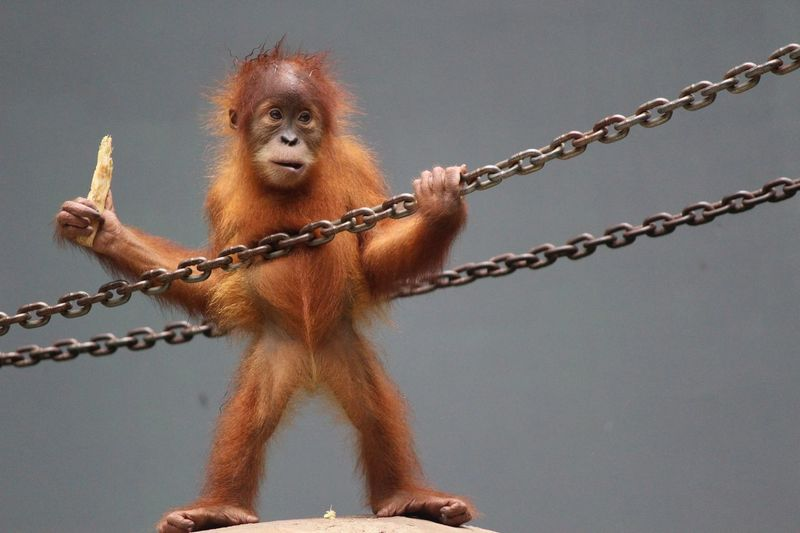 View of monkey on rope
