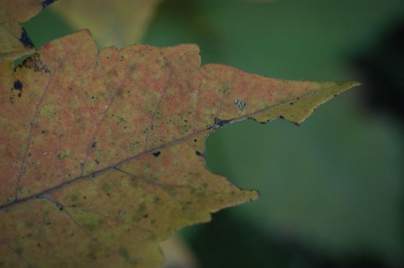 春はパステル系、秋は和の色。 Leaf Autumn Nature Change Close-up Beauty In Nature Fragility Leaf Vein Japanese Colors