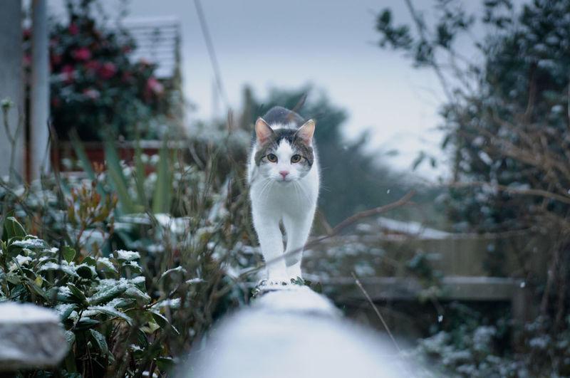 Portrait of cat walking amidst plants