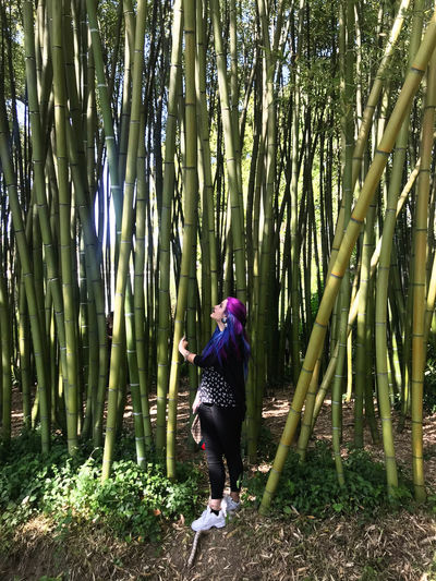 Full length of woman standing by bamboo grooves in forest