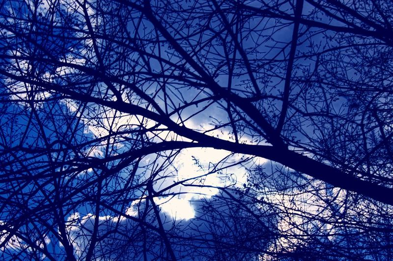 An emotive sky sillouetting a bare tree. Bare Tree Branch No People Low Angle View Silhouette Nature Tranquility Winter Beauty In Nature Cloud Formations Eyeem Market Art Is Everywhere EyeEmNewHere EyeEm Best Shots EyeEmBestPics See The World Through My Eyes Exceptional Photographs Popular Photos Silhouette Blue Sky Dramatic Sky Weather Storm Cloud