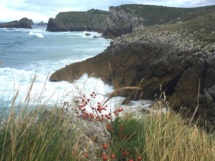 Water Grass Tranquil Scene Scenics Plant Beauty In Nature Growth Tranquility Nature Non-urban Scene Sea Flower Rock Formation Tourism Mountain Physical Geography Coastline Calm Day Llanes Asturias Paraiso Natural🌿🌼🌊🌞 Iphone6