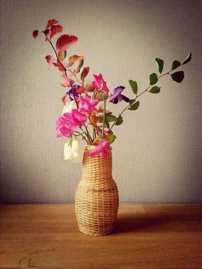 ein herbstlicher Gruß aus meinem Garten. Flowers Mygarden:) Fall Happyness