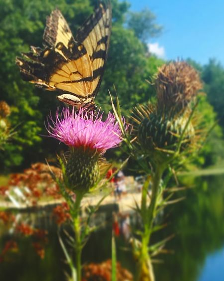 Taking a rest Flower Plant Close-up Nature Beauty In Nature Blacksburg Pandapas Pond Insect Butterfly