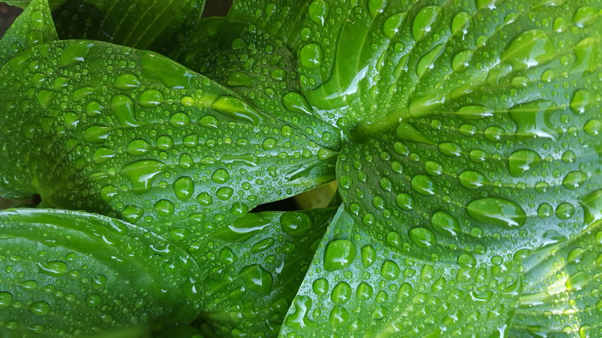 Funkien Green Green Green!  Raindrops Structures Close-up Shades Of Green  Nature On Your Doorstep RainDrop Water Drop