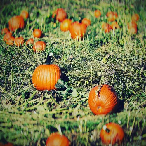 That time of year again. Fall Pumpkinpatch