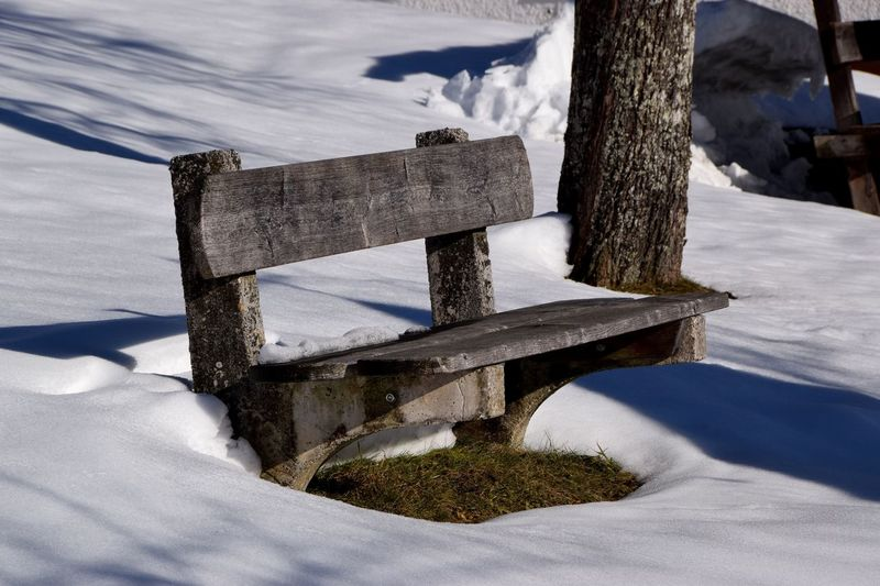 Snow covered bench by tree trunk during winter
