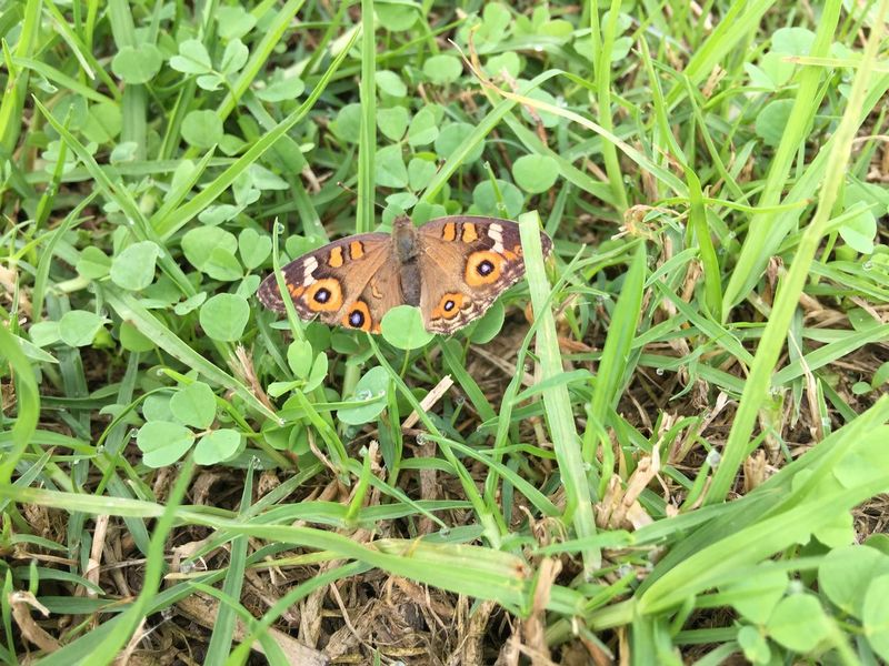 Found a butterfly on grass