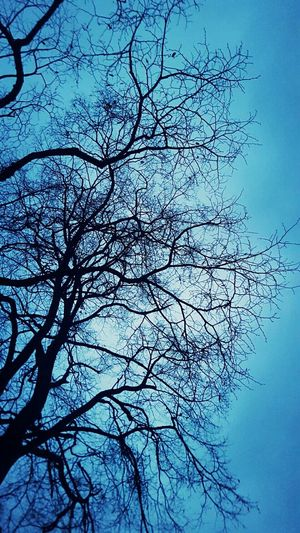 Tree Sky Nature Bare Tree Branch Silhouette Outdoors Beauty In Nature No People No Leafs
