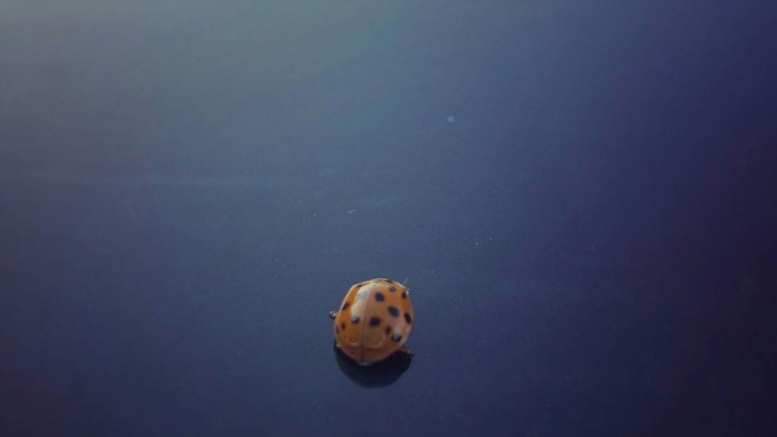 Lady Bug Upclose And Personal Cheese! Extreme Close-up Interesting Perspectives