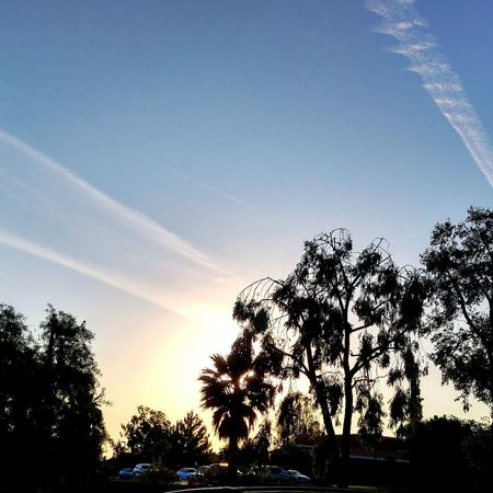 Nature Nature_collection Nature Photography Sky Sky_collection Skyline Sunset Sun And Sky Sun And Trees Trees Trees And Sky Skylovers Blue Sky Sundown Chemtrails