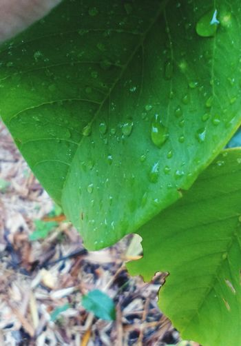 First Eyeem Photo Beauty In Nature Leaf Green Color Drop Nature Close-up Wet No People Day Outdoors Freshness Plant Water Fragility