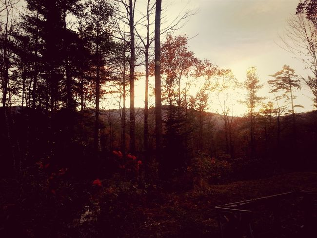 Maine Fall Foliage Hanging Out Check This Out