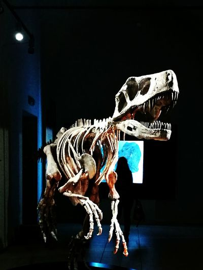 Padova T Rex Attack Dinosaurs Argentina 👑🎉🎊👌😚😍 EyeEmNewHere