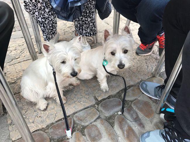 Nilo, sena, perro, dog