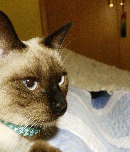 Nala Homelife Feline Love