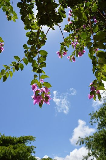 Flowers and blue sky . Taipei Winze's Life in August 2013