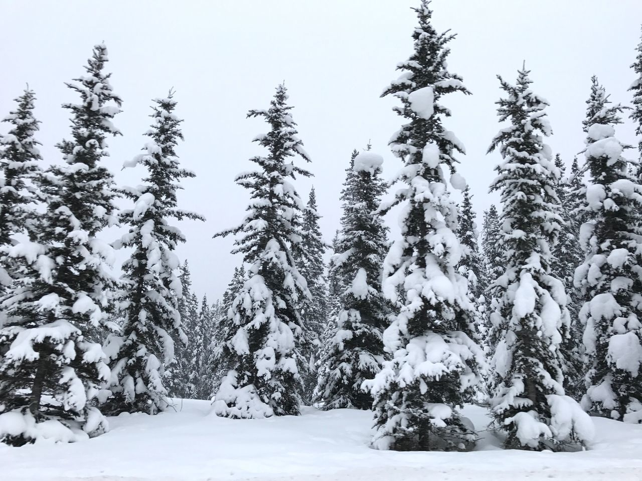 Trees In Snow Covered Forest Against Sky