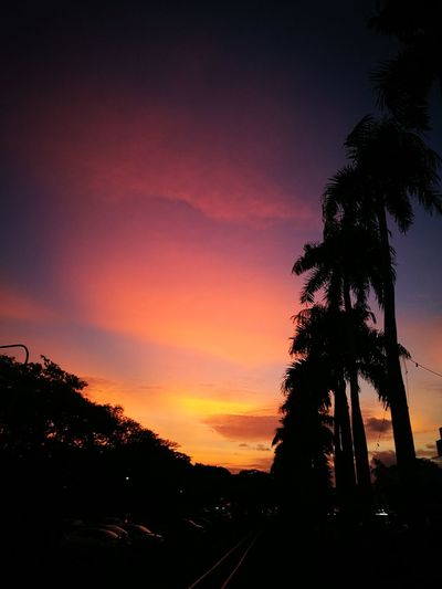Sunset Beauty In Nature Nature Sky Fiji Islands Lautoka Landscape Red Sky At Sunset Red Sky's And Trees Red Sky And Clouds