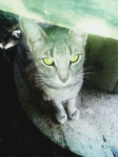 Precius gato hermoso perdido