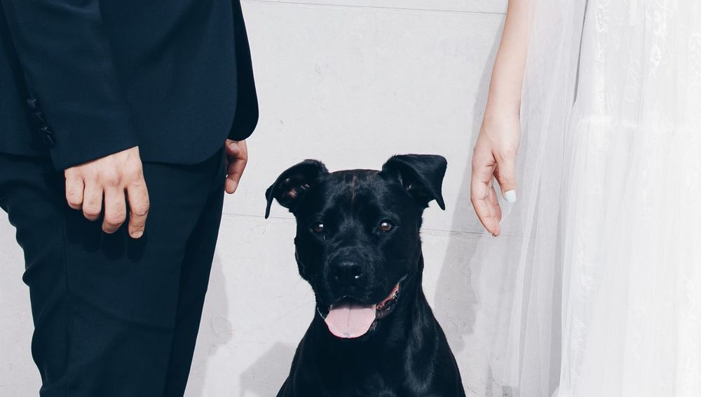 Wedding Bride Hello World Portrait Of A Woman EyeEm Selects Friendship Pets Protruding Portrait Human Hand Togetherness Dog Men Bonding Honesty Pit Bull Terrier