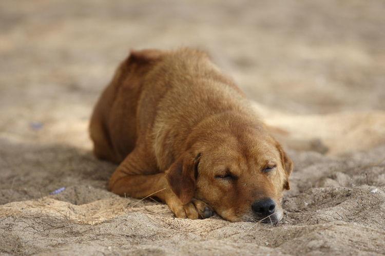 Portrait of dog on sand
