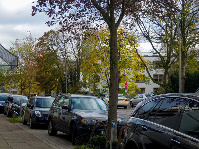 Cars parked on road against trees in city