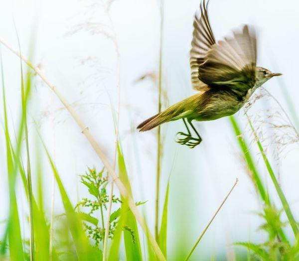 Bird flying by plants