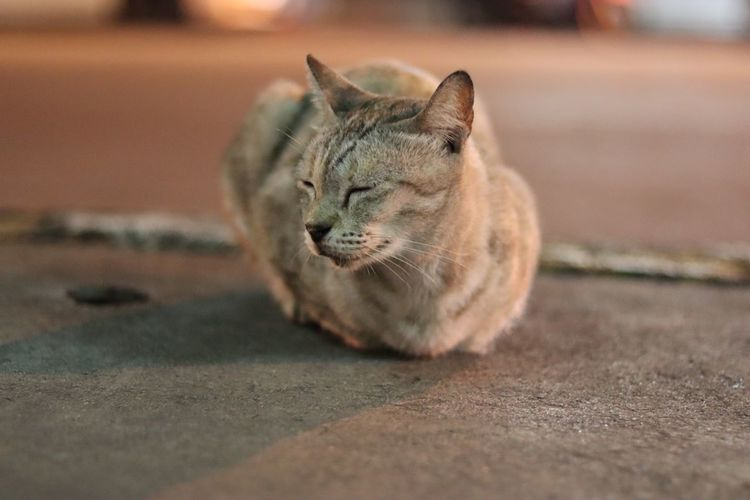 Close-up of a cat lying on footpath