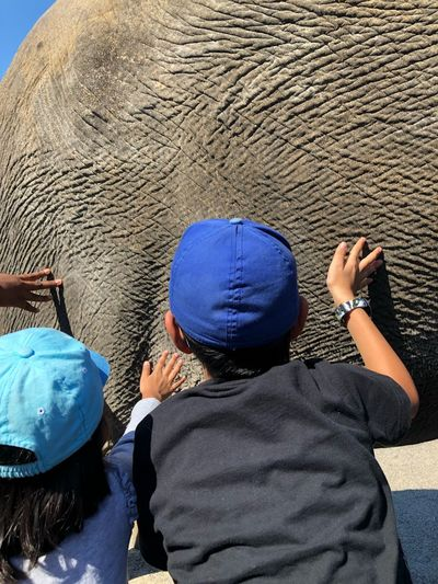 Rear View Of Children Touching Elephant