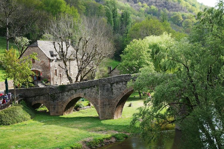 Vieux Pont de Belcastel - Tree Growth Green Color Nature Grass Travel Destinations Oldtown Bridge Old Bridge Architecture Old Architecture Old Town Water River Riverside Aveyron Old Village Occitanie Nature Nature Photography Beauty In Nature Architecture_collection