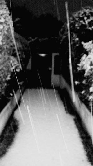 Monday Morning Blackandwhite Snow Garden