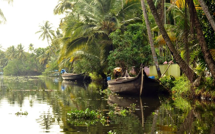Boats Moored In Kerala Backwaters Against Trees