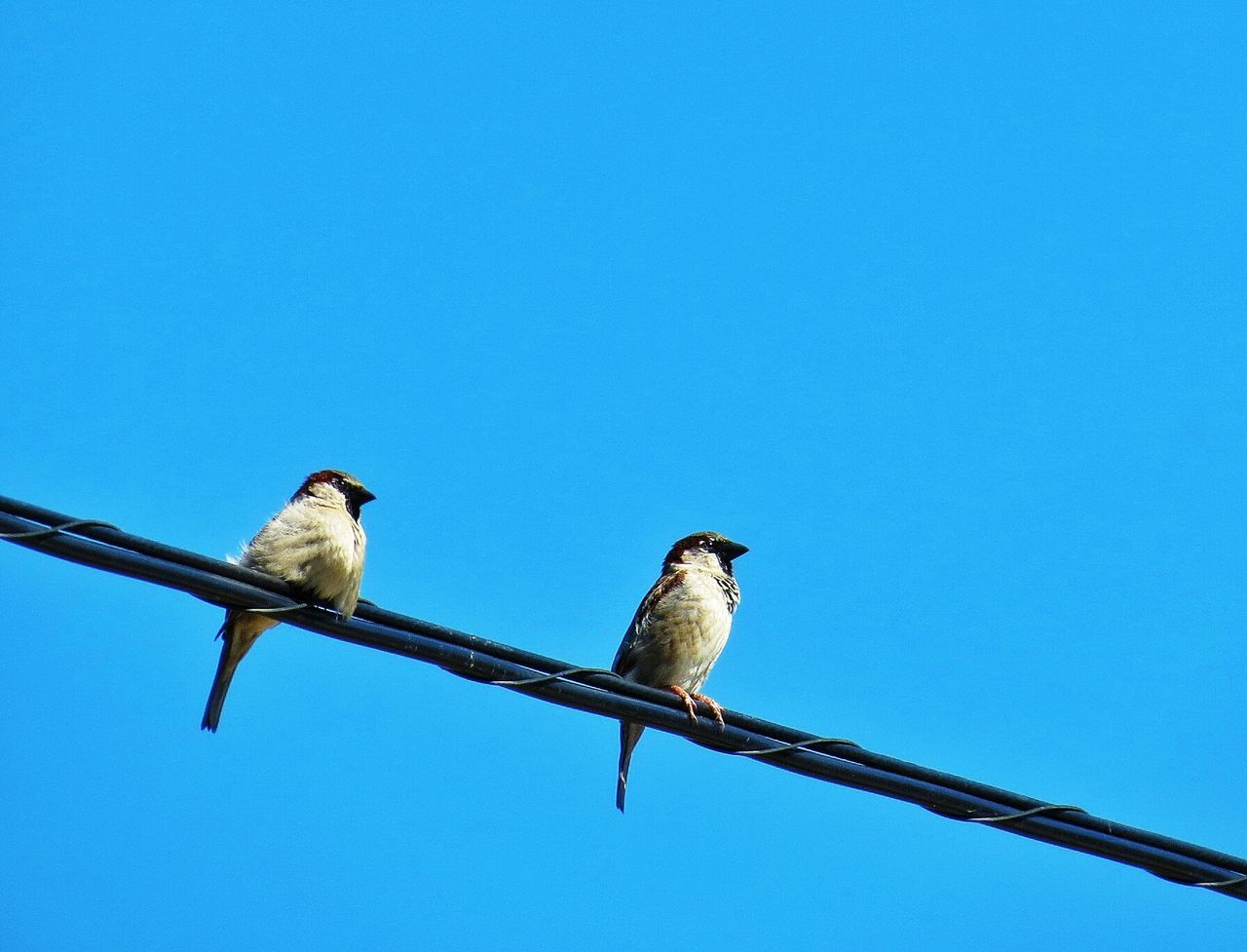 Low angle view of birds perched on railing against blue sky