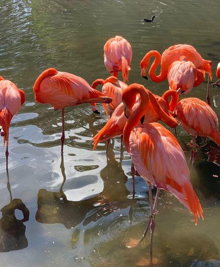 Flock of birds in lake