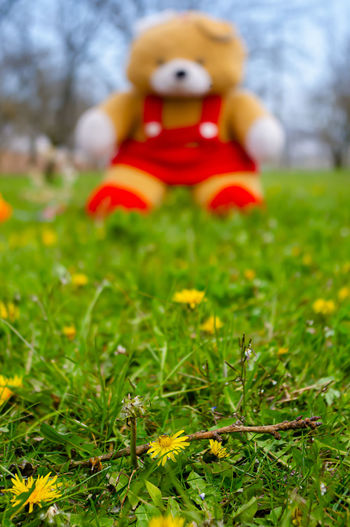 Close-up of red toy on field