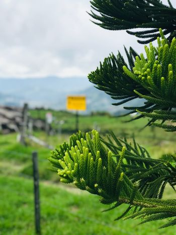G R E E N L O V E R Mine Scenics EyeEmNewHere EyeEm Best Shots Green Color Growth Focus On Foreground Beauty In Nature Nature Tree Close-up Tranquility Outdoors Cloud - Sky Leaf Water Coniferous Tree Day Sky Freshness Plant Part No People Scenics - Nature